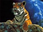 tigree.jpg